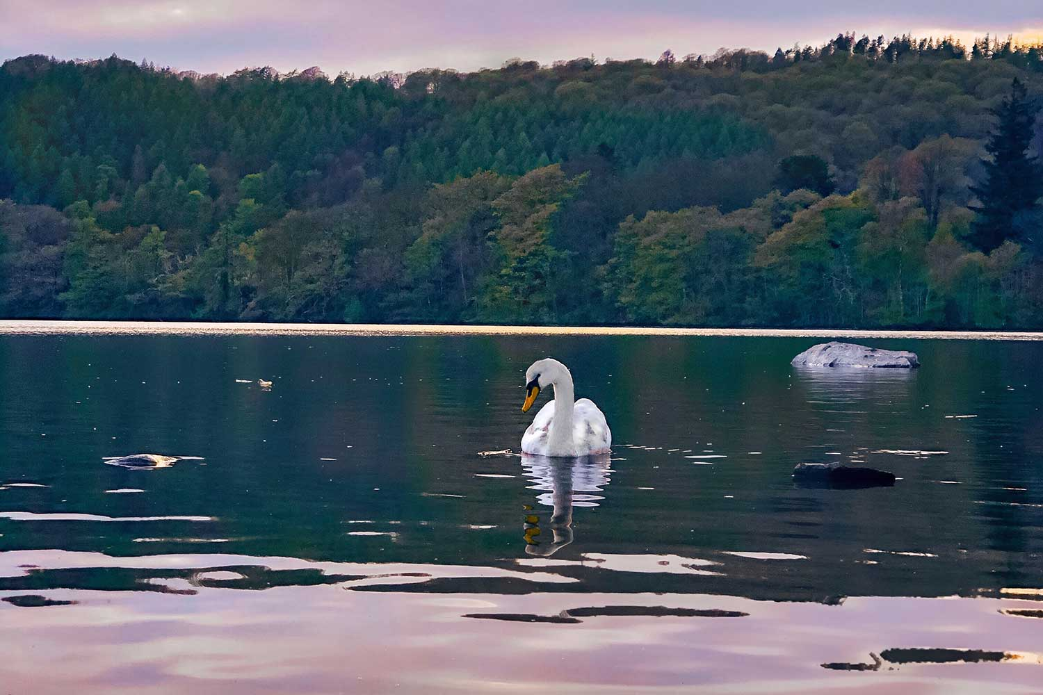 windermere-accommodation-self-catering-OSPREY25